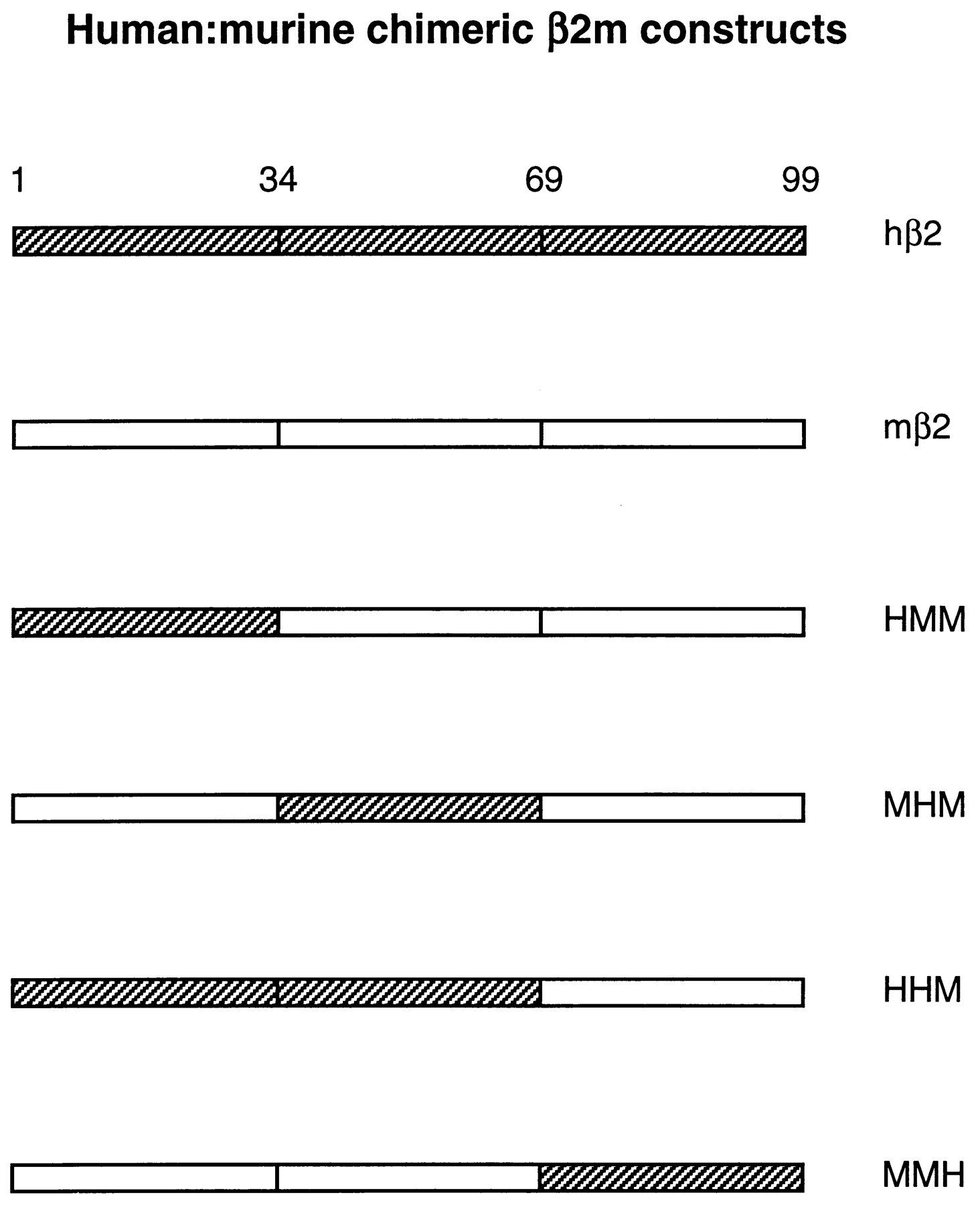 characterization of the interactions between mhc class i subunits a