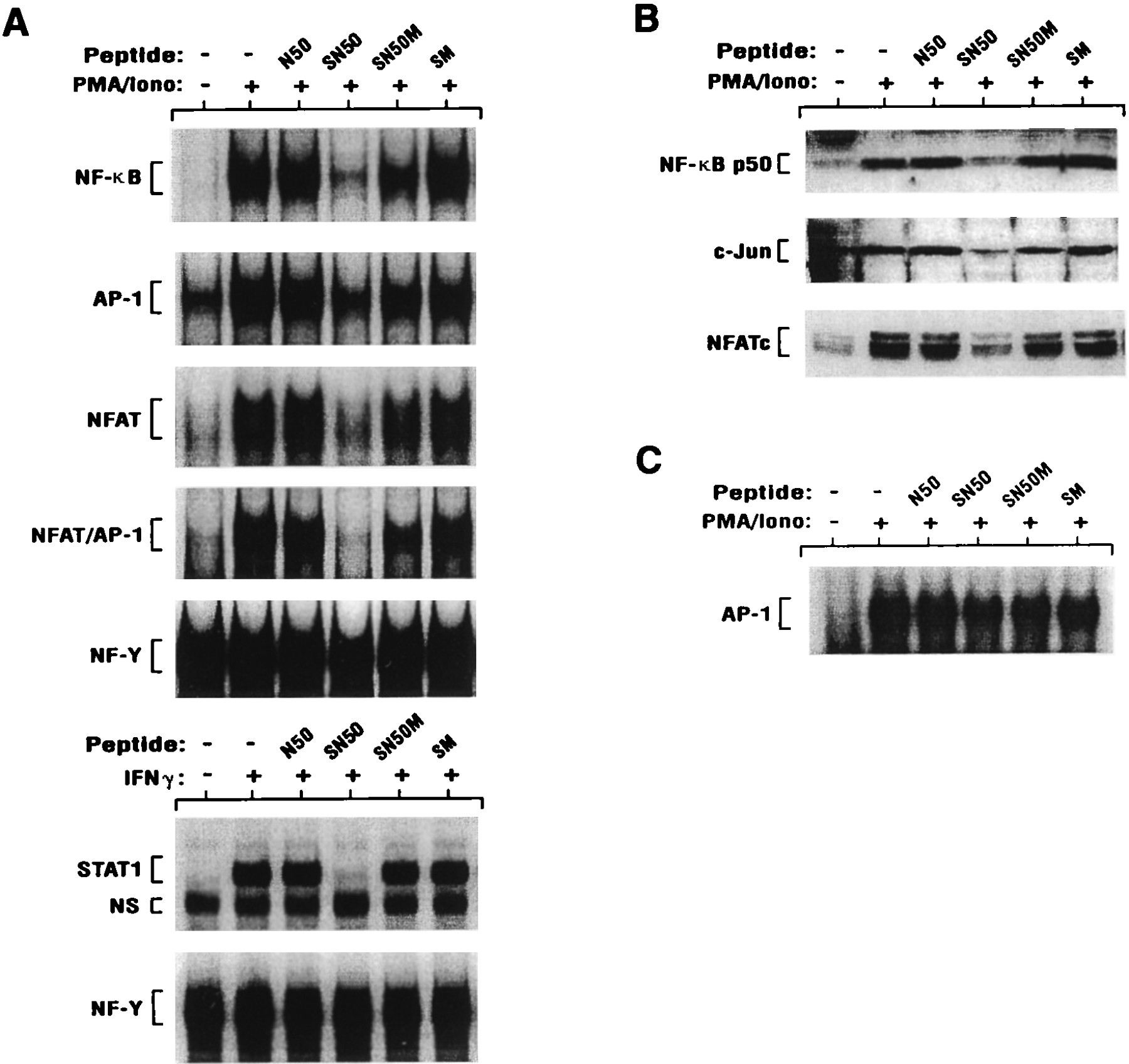 Regulation Of NF-κB, AP-1, NFAT, And STAT1 Nuclear Import