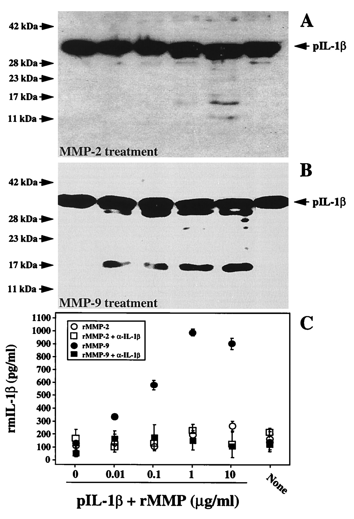 Generation Of Biologically Active IL 1 By Matrix Metalloproteinases