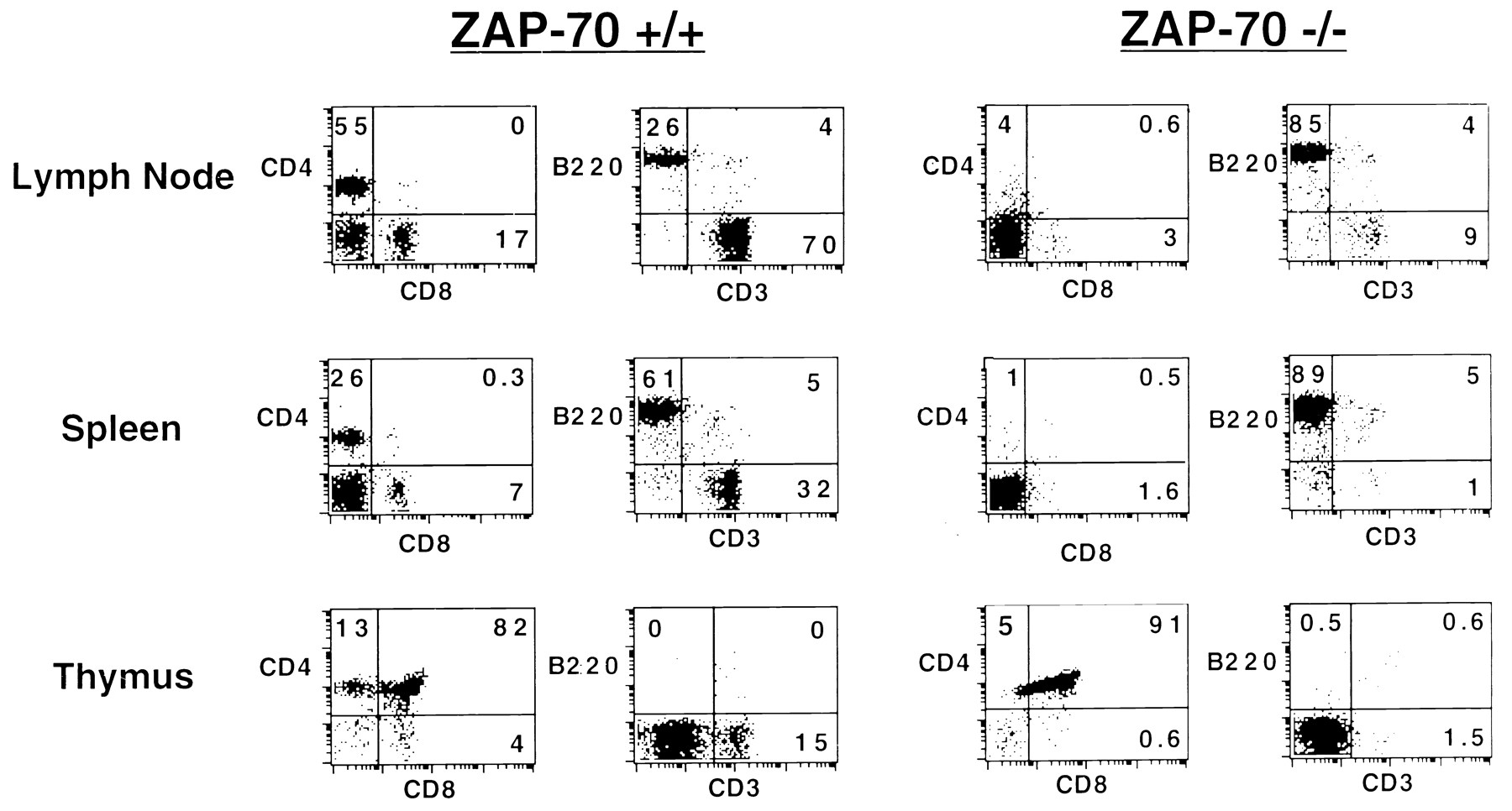 Differential Requirements For Zap 70 In Tcr Signaling And T Cell Wiring Diagram Bolens 1053 Download Figure