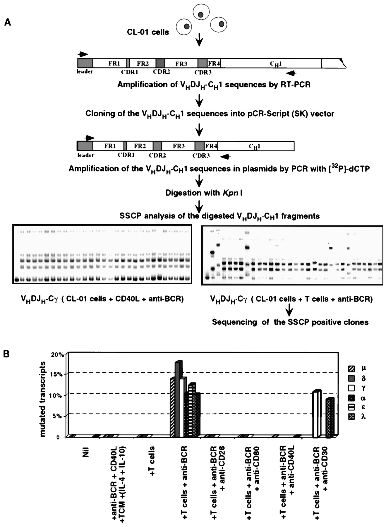 induction of ig somatic hypermutation and class switching in a human