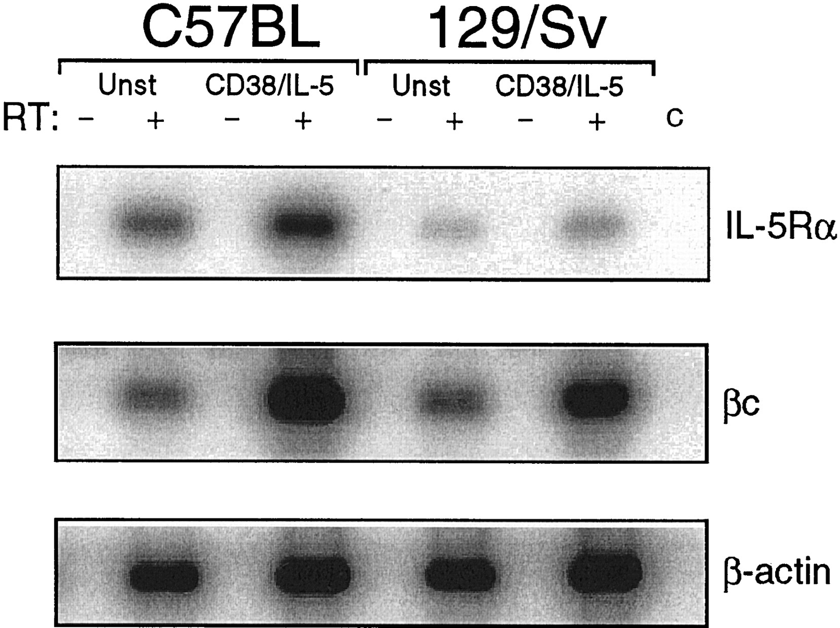 il 5 and rp105 signaling defects in b cells from commonly used 129