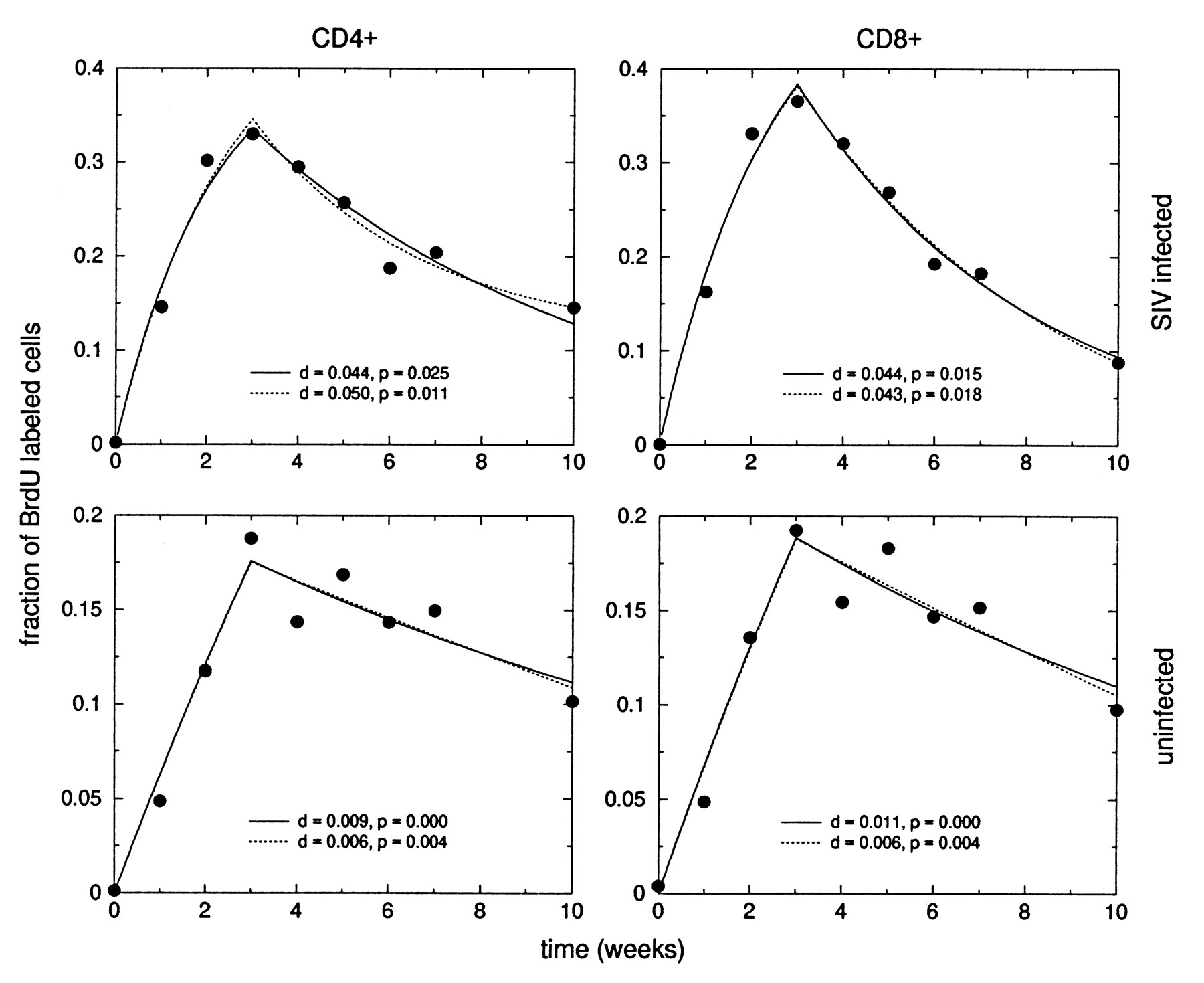 Quantification Of Cell Turnover Kinetics Using 5 Bromo 2 Labeled Animal Diagram Related Keywords Suggestions Download Figure