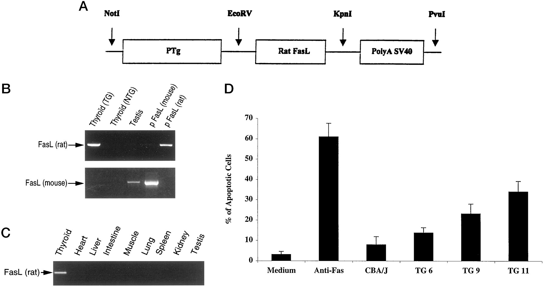 Transgenic Expression Of Fas Ligand On Thyroid Follicular Cells Figure Ptg Type High Frequency Generator Circuit Download