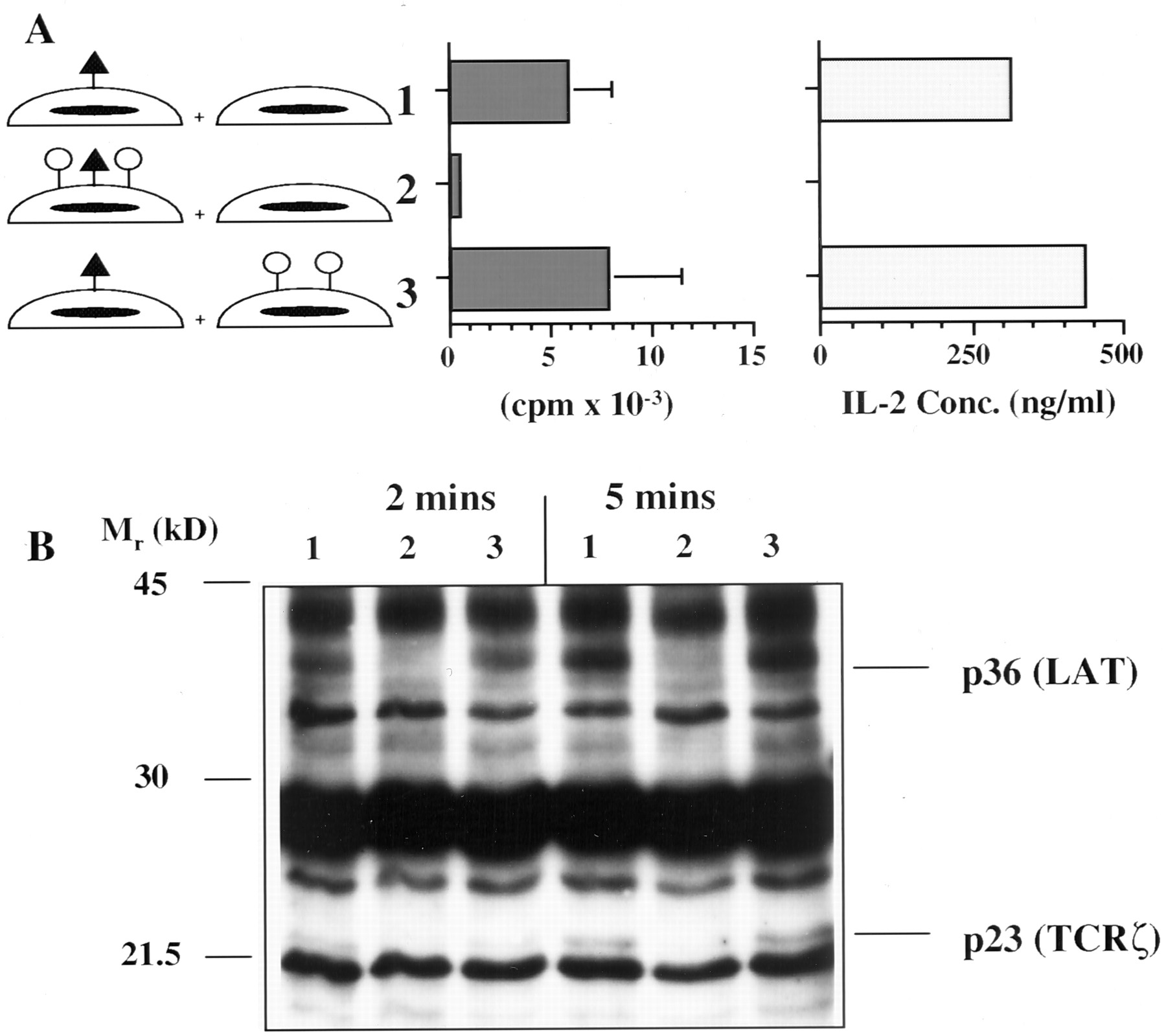 Blockade Of T Cell Activation Using A Surface Linked Single Chain Circuit Triangle Signal Generator Designed By Dave Johnson P Download Figure