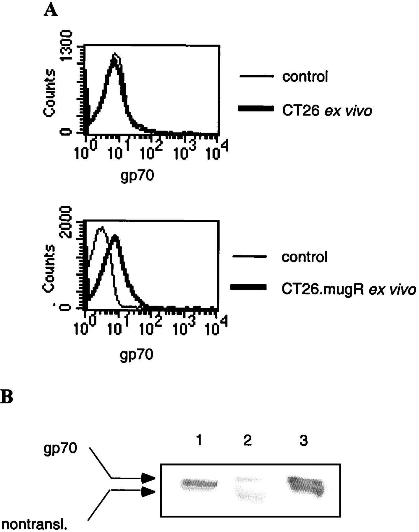 Ifn γ Can Promote Tumor Evasion Of The Immune System In Vivo