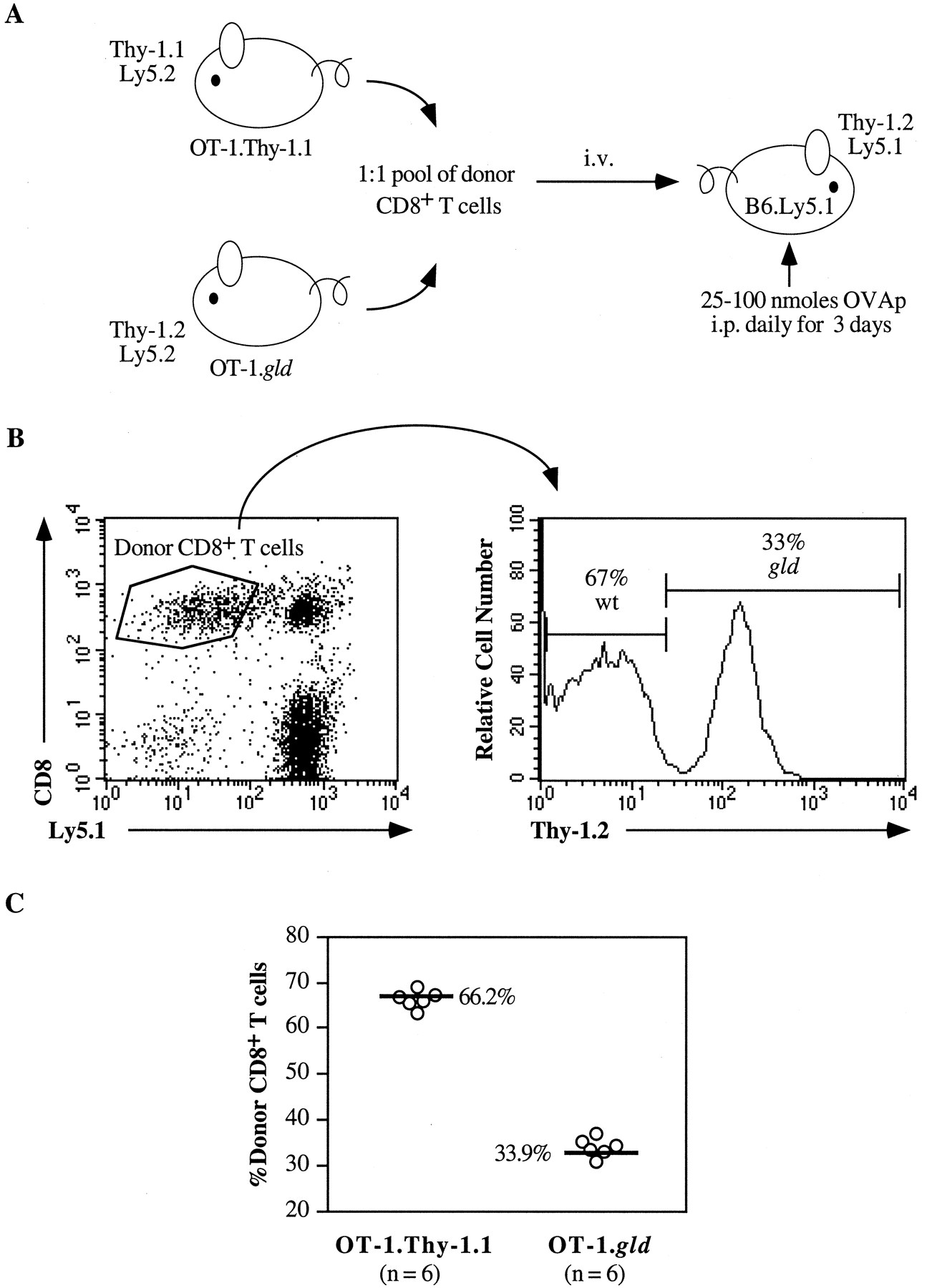 Fas Ligand Costimulates The In Vivo Proliferation Of Cd8 T Cells Circuit Diagram Cell Download Figure