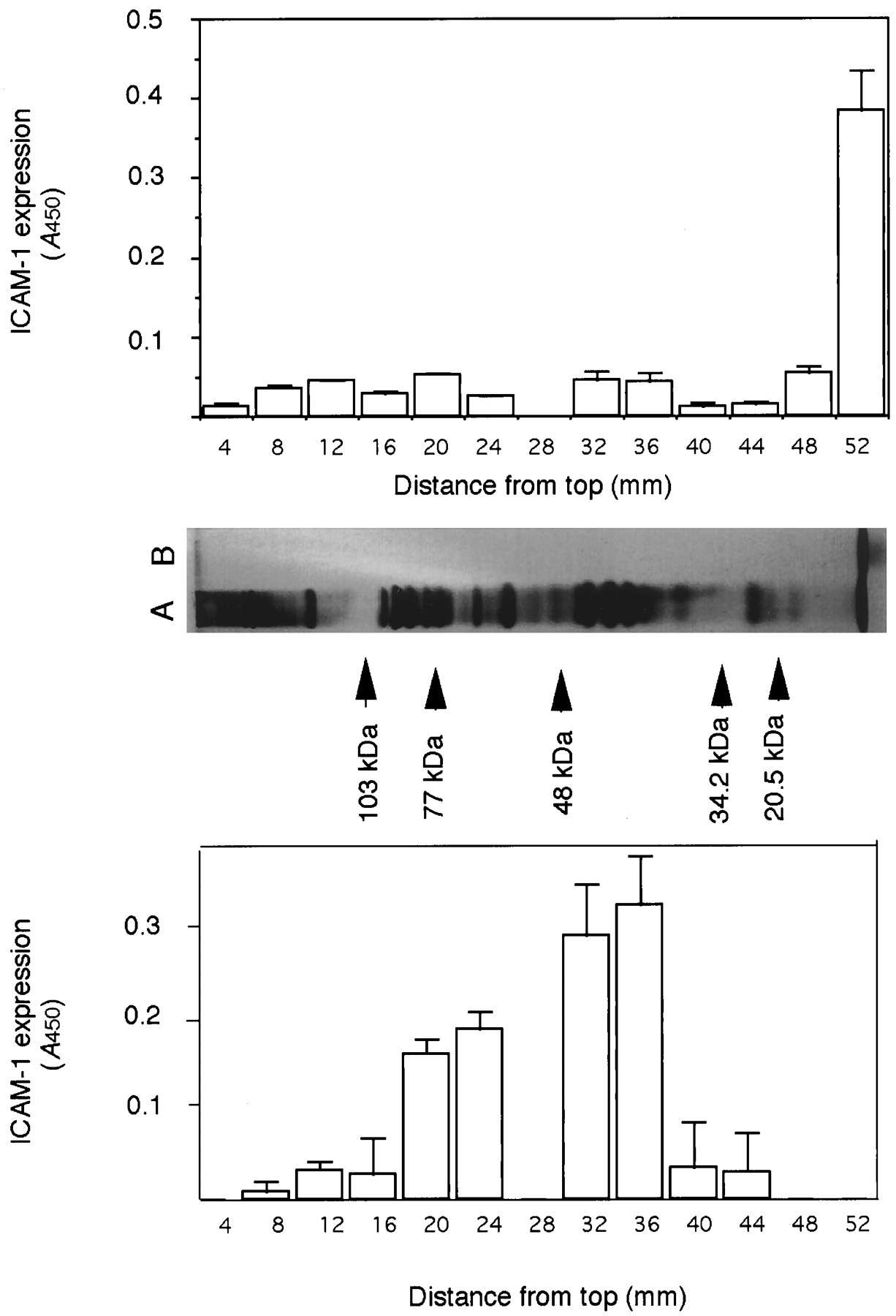 The N-Terminal Lipopeptide of a 44-kDa Membrane-Bound Lipoprotein of