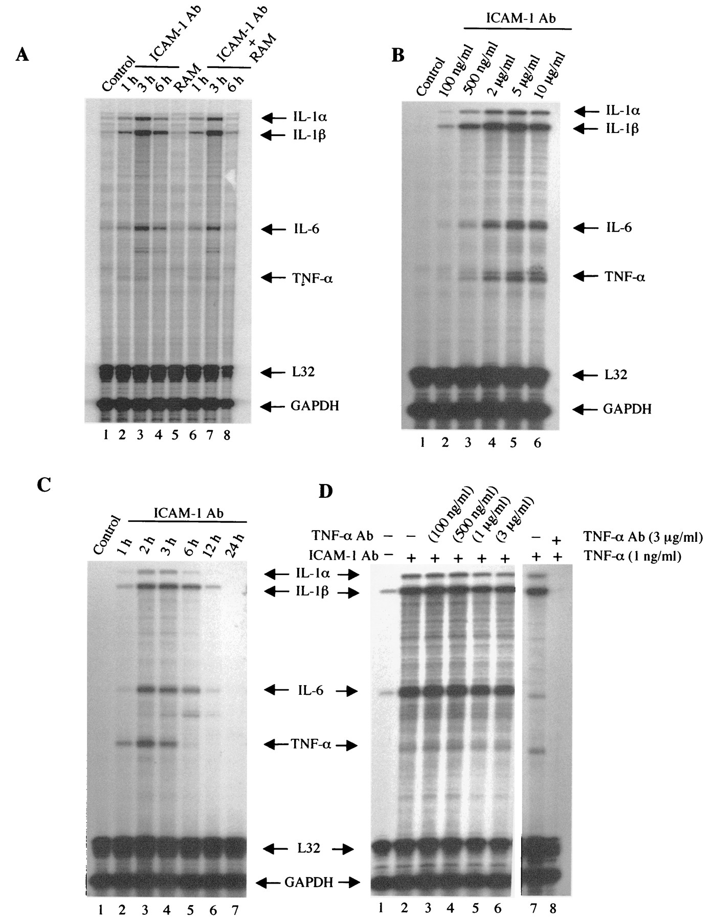 ICAM-1-Induced Expression of Proinflammatory Cytokines in