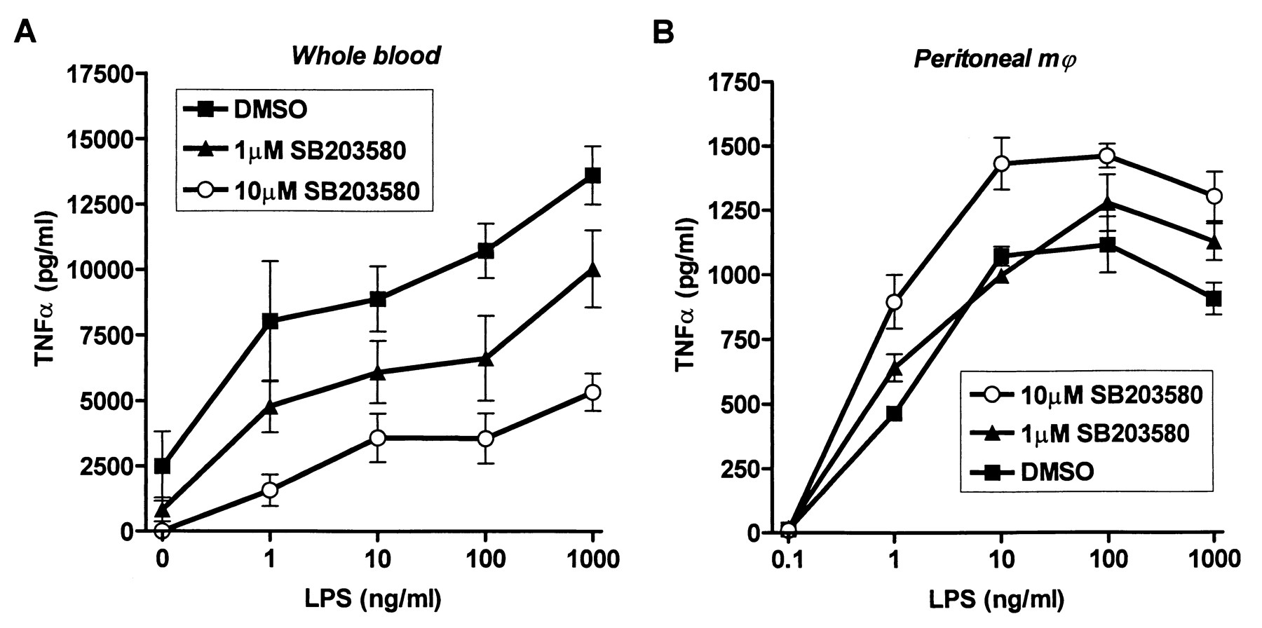 p38 Mitogen-Activated Protein Kinase Inhibition Increases