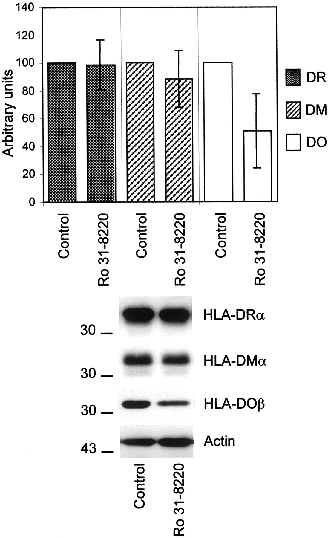 In Vivo and In Vitro Modulation of HLA-DM and HLA-DO Is