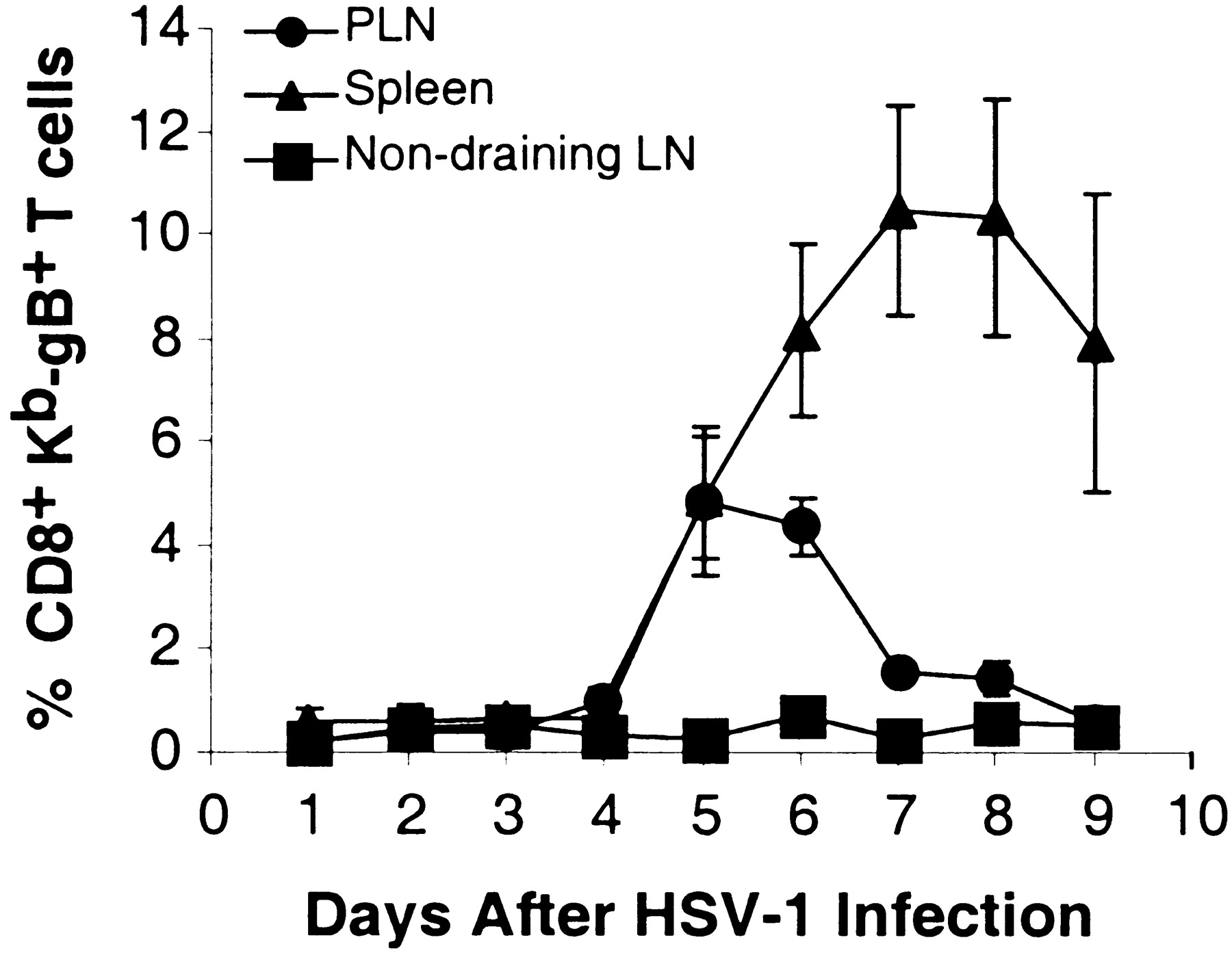 Progression Of Armed Ctl From Draining Lymph Node To Spleen Shortly