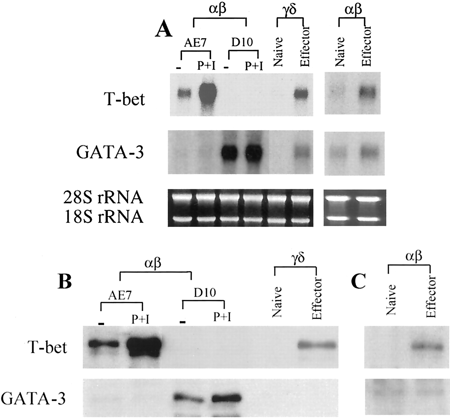 T-Bet Expression and Failure of GATA-3 Cross-Regulation Lead