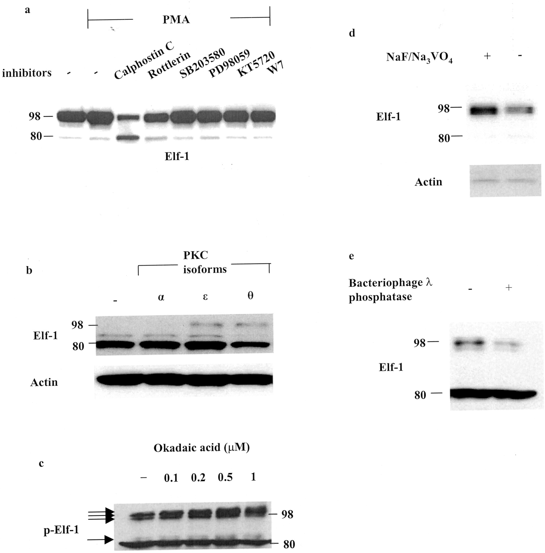 Phosphorylation and O-Linked Glycosylation of Elf-1 Leads to Its