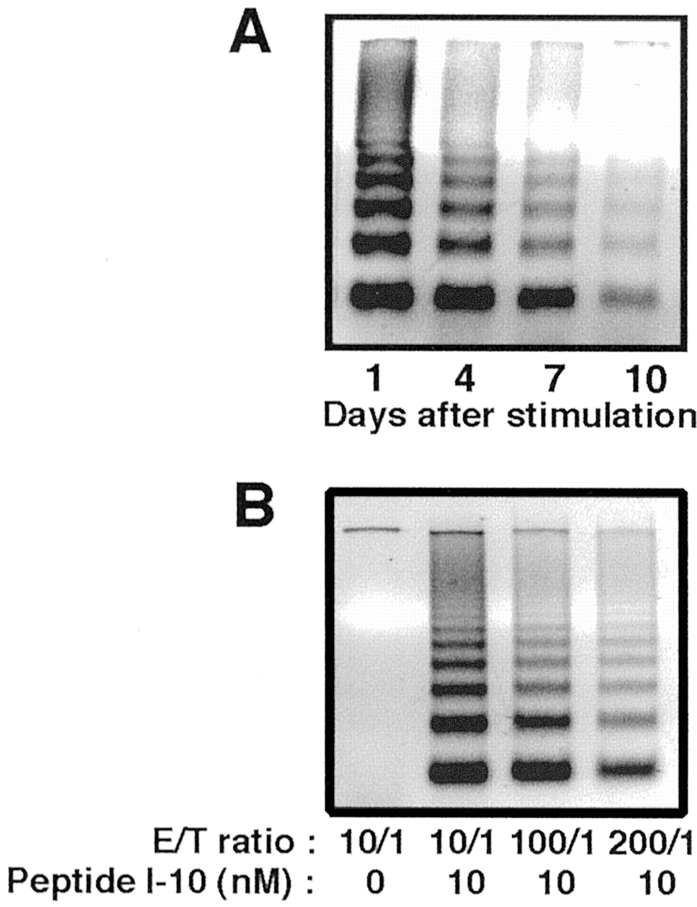 1d1db07ecc1e Rapid Induction of Apoptosis in CD8+ HIV-1 Envelope-Specific Murine ...