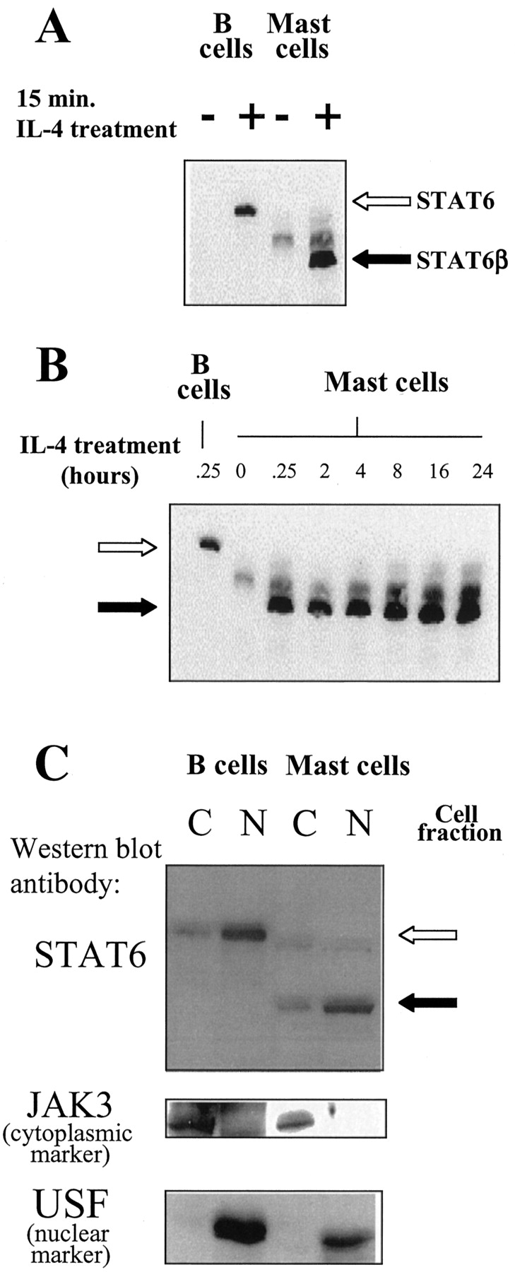 Il 4 induces the proteolytic processing of mast cell stat6 the download figure falaconquin