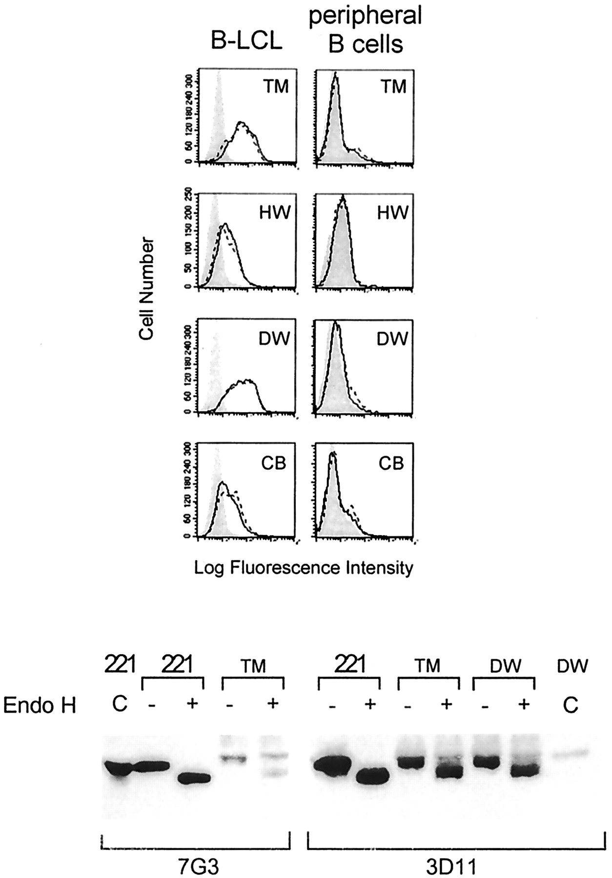 HLA-F Surface Expression on B Cell and Monocyte Cell Lines Is ...