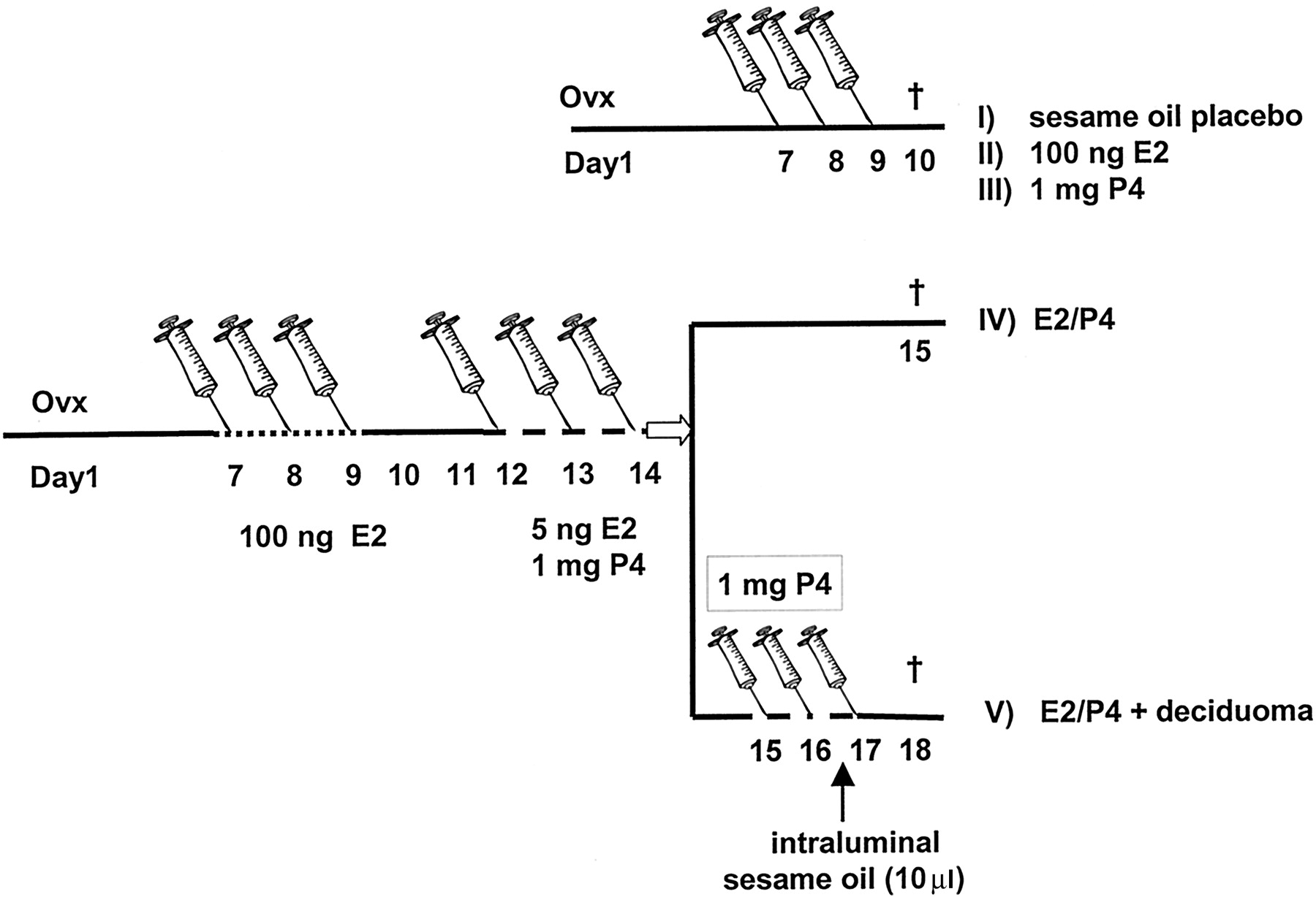 Coordinate Regulation Of Lymphocyte Endothelial Interactions By Image 1 1972 Mgb Gt Original Wiring Diagram Click To Enlarge Download Figure