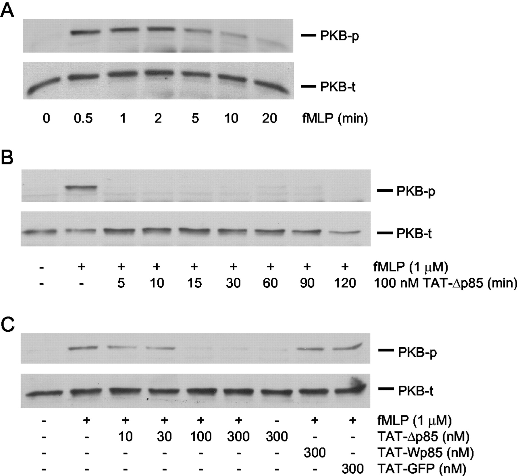 Activation of Group IV Cytosolic Phospholipase A2 in Human