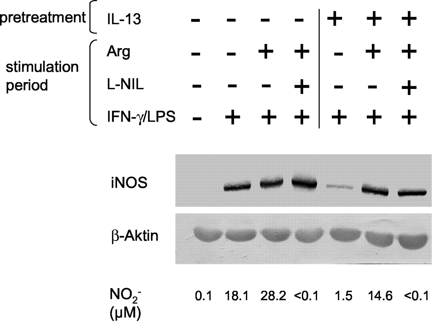 Translational Control of Inducible Nitric Oxide Synthase by