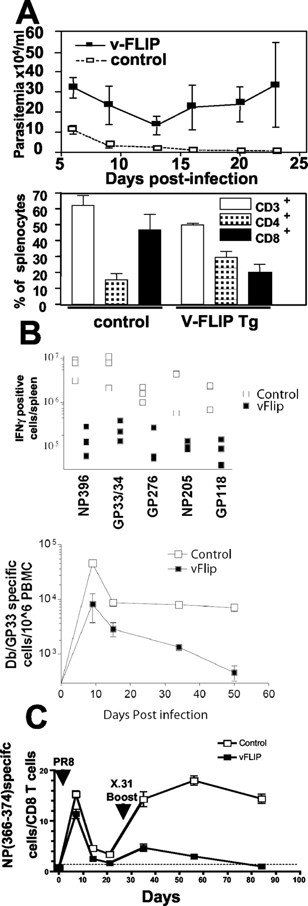 Viral FLIP Impairs Survival of Activated T Cells and