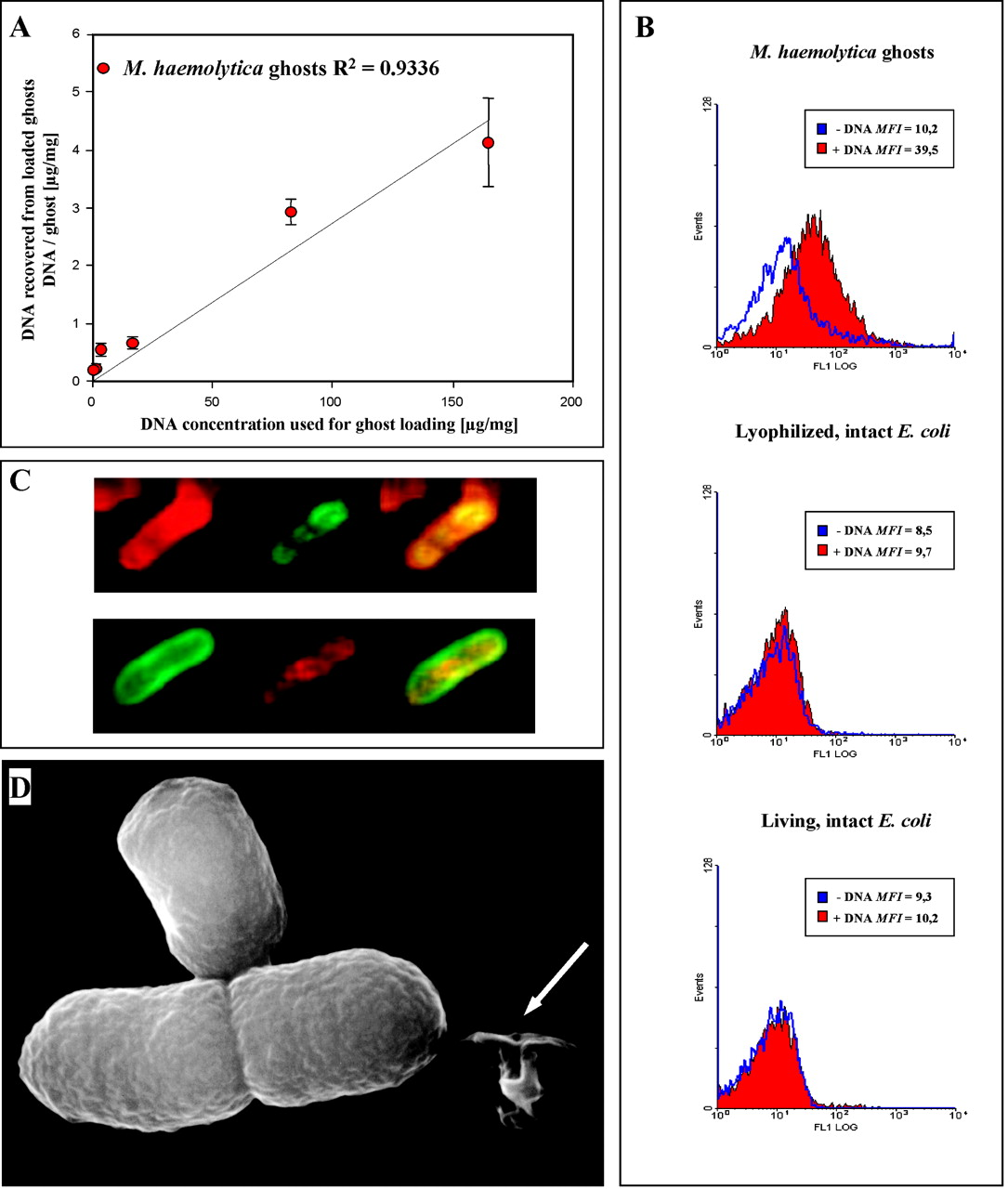 Bacterial Ghosts Are an Efficient Delivery System for DNA Vaccines | The Journal of Immunology  Bacterial Ghost...
