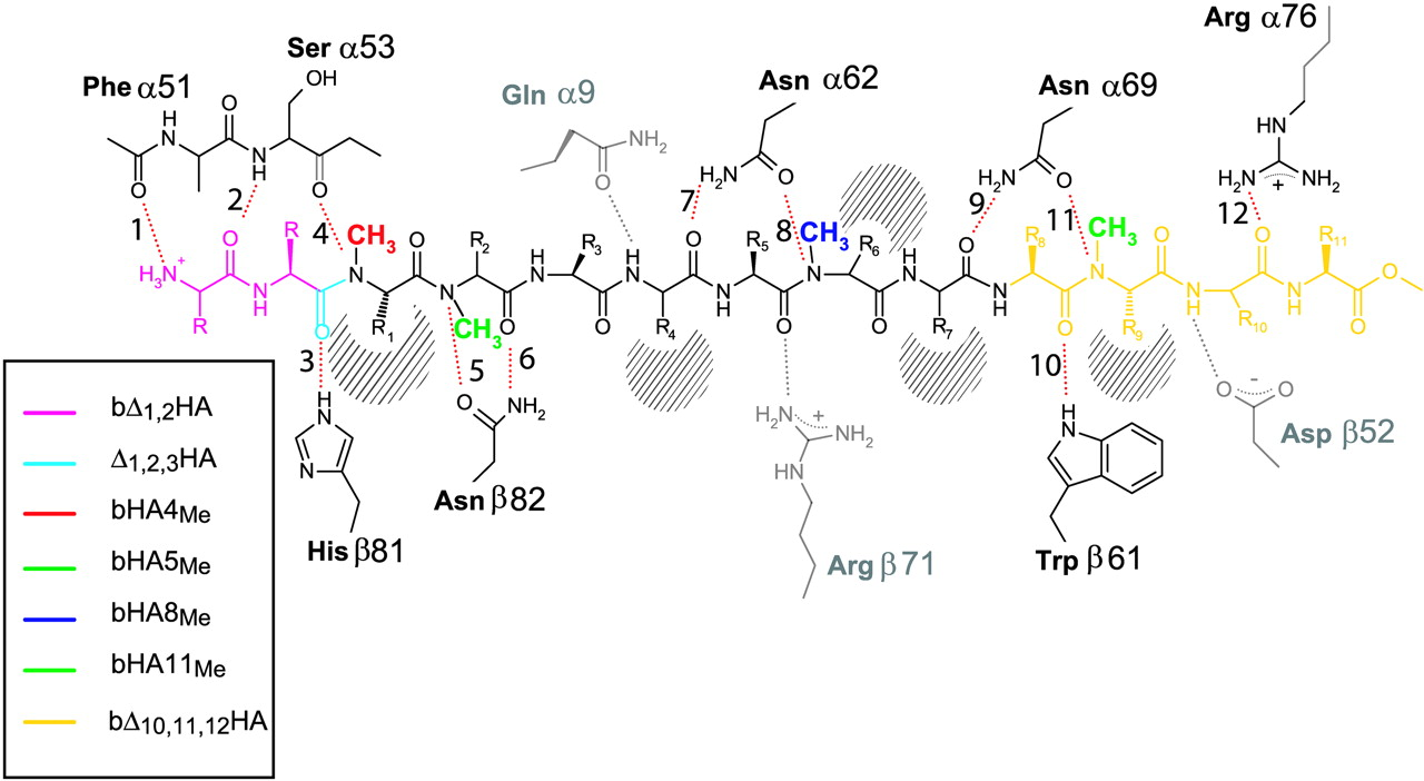 Enhanced Catalytic Action Of Hla Dm On The Exchange Of Peptides