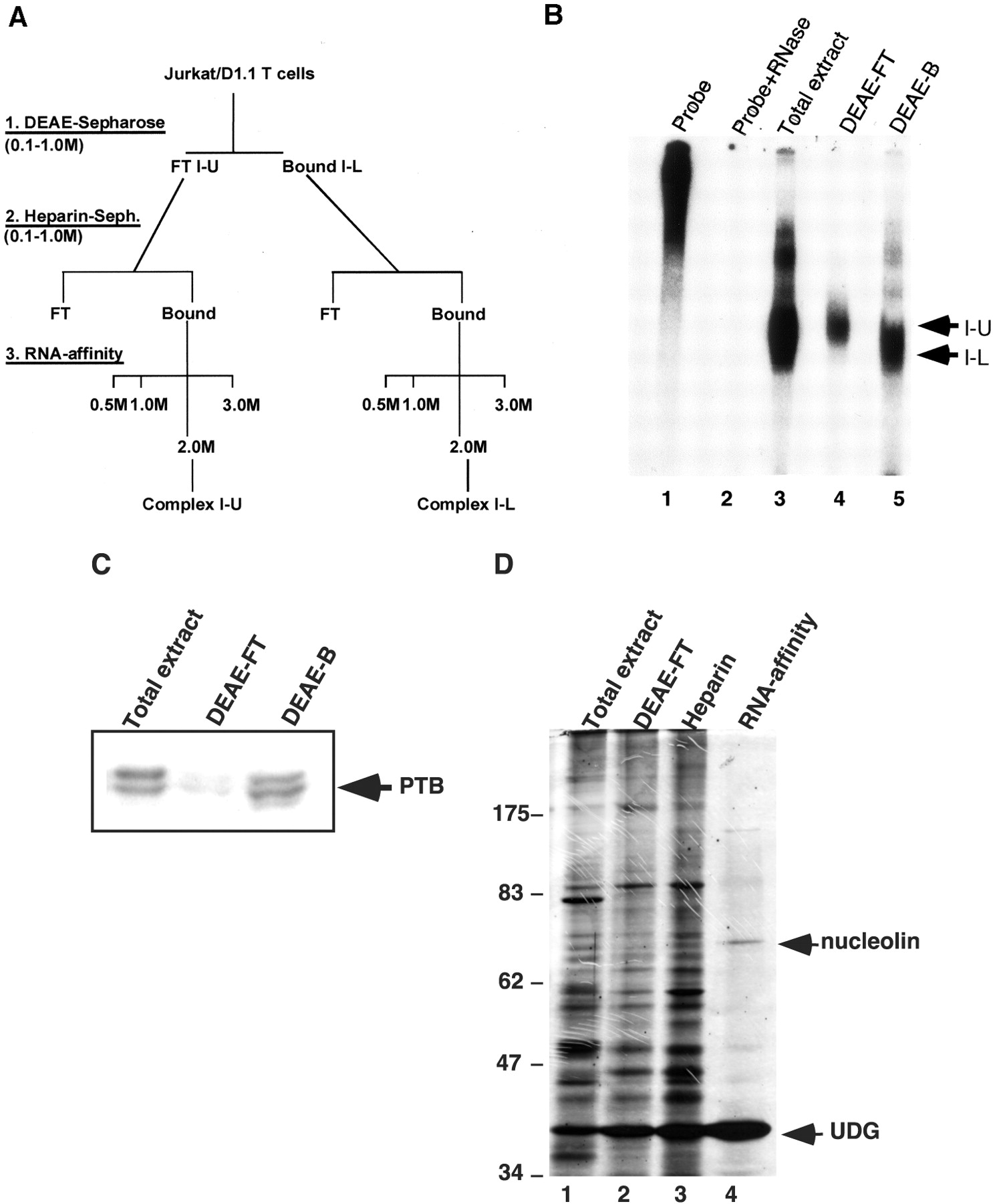 Nucleolin is a second component of the cd154 mrna for Stability protocol template