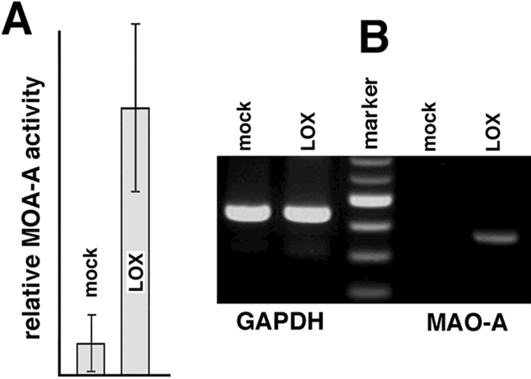 Th2 response of human peripheral monocytes involves isoform download figure hexwebz Choice Image