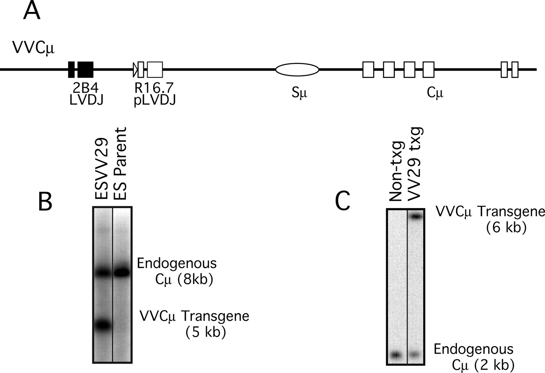Sequence Transfers Between Variable Regions In A Mouse Antibody Diagram Download Figure