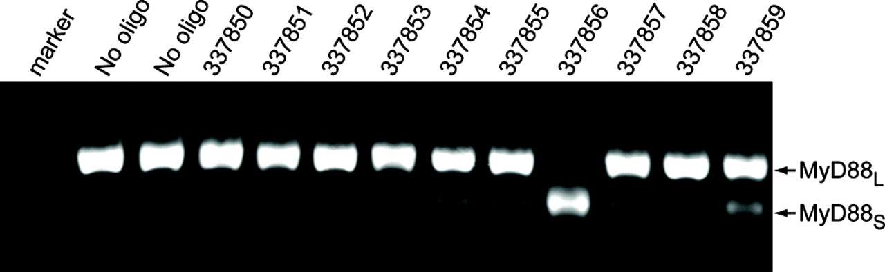 Modification of MyD88 mRNA Splicing and Inhibition of IL-1β ...