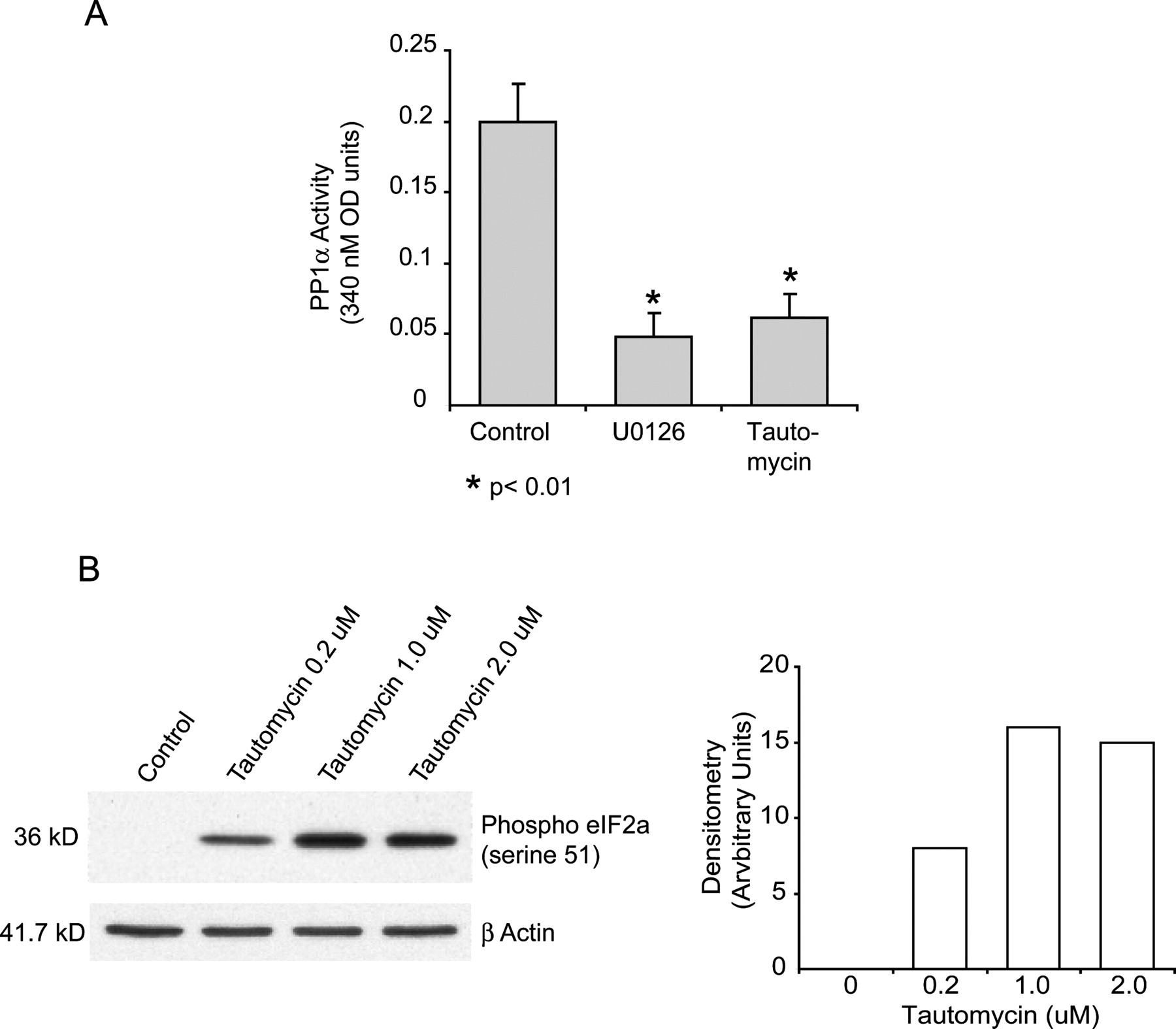 Active ERK Contributes to Protein Translation by
