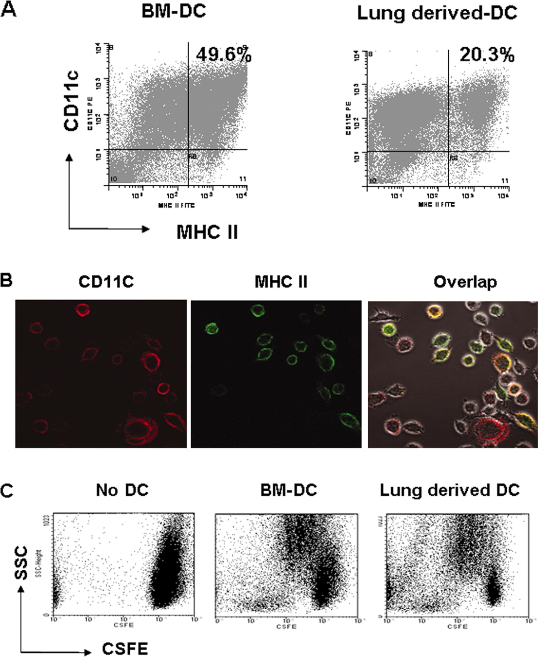 Local Cd11c Mhc Class Ii Precursors Generate Lung Dendritic Cells Wiring Diagram Dashed Line Download Figure