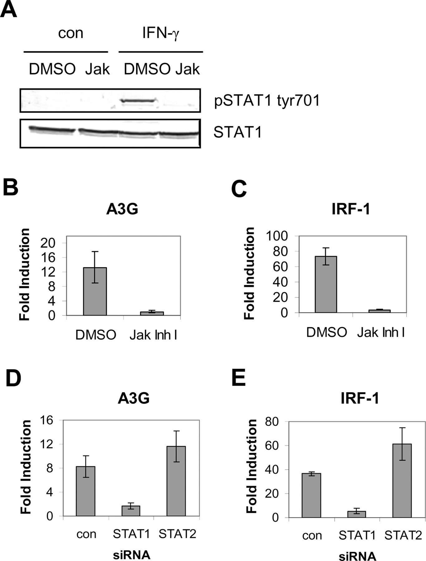 STAT1-Independent Cell Type-Specific Regulation of