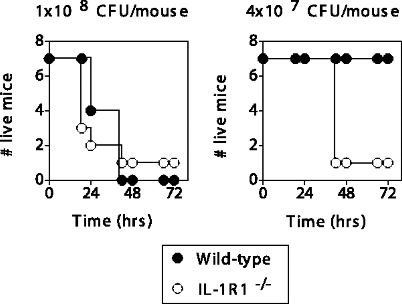 Endogenous Il 1r1 Signaling Is Critical For Cognate Cd4 T Cell Help 1996 S15 Abs Wiring Diagram Download Figure