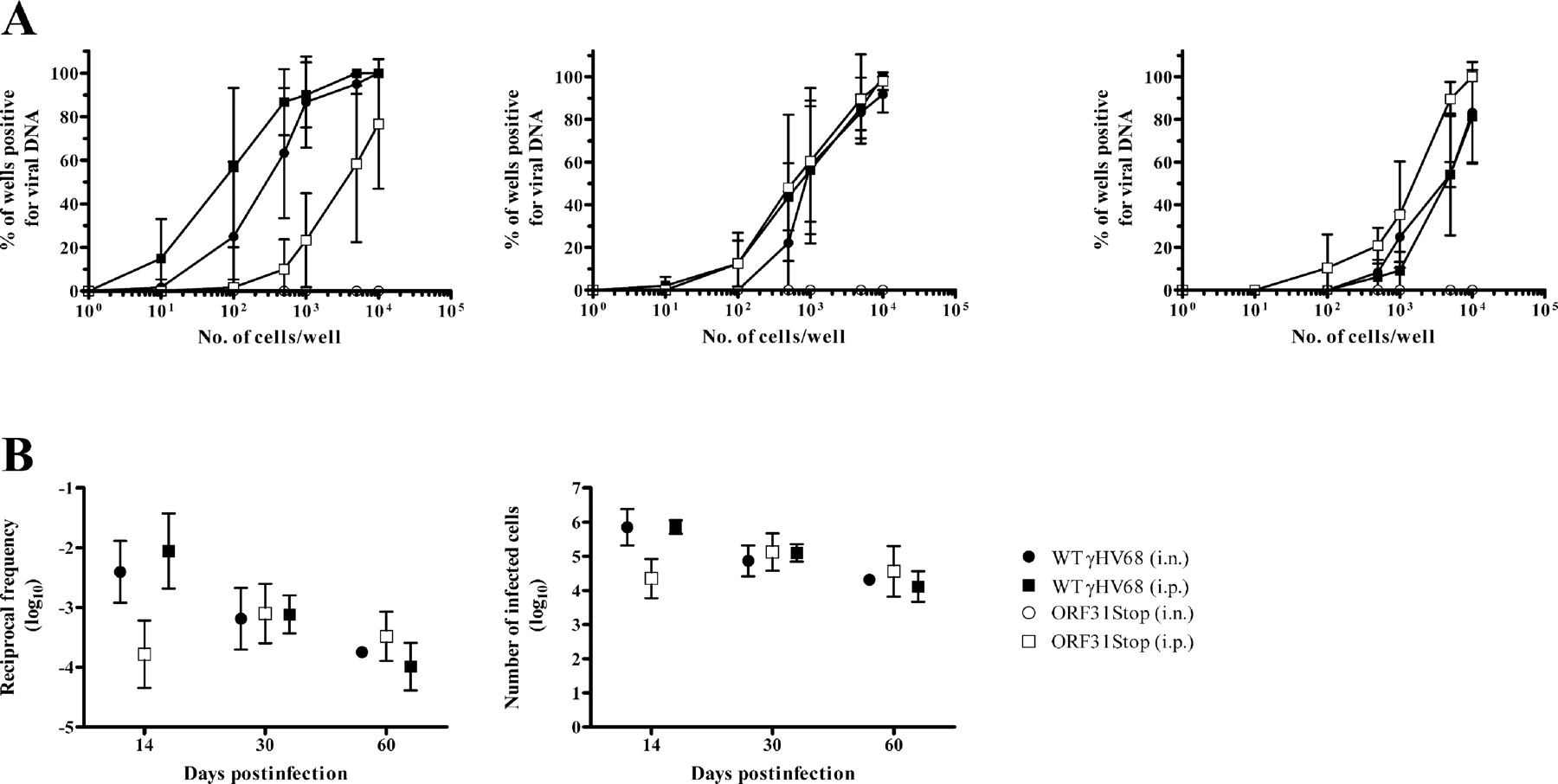 A Replication-Deficient Murine γ-Herpesvirus Blocked in Late Viral