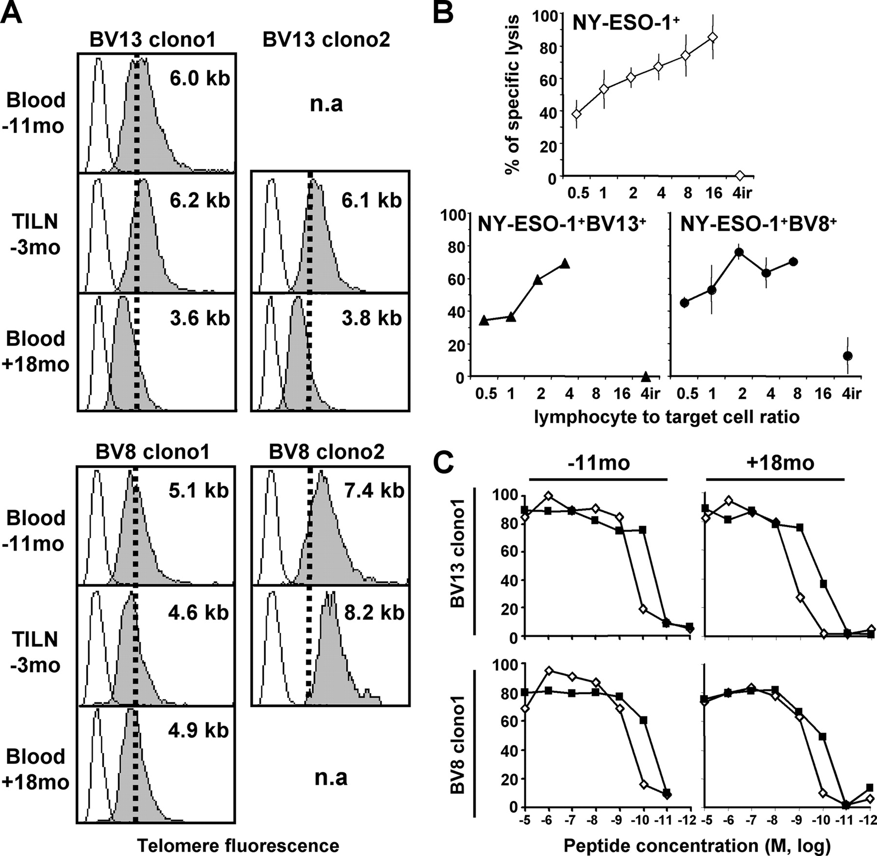 In Vivo Persistence of Codominant Human CD8+ T Cell