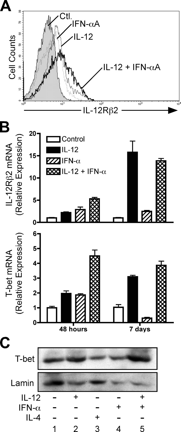 IFN-α Is Not Sufficient to Drive Th1 Development Due to Lack