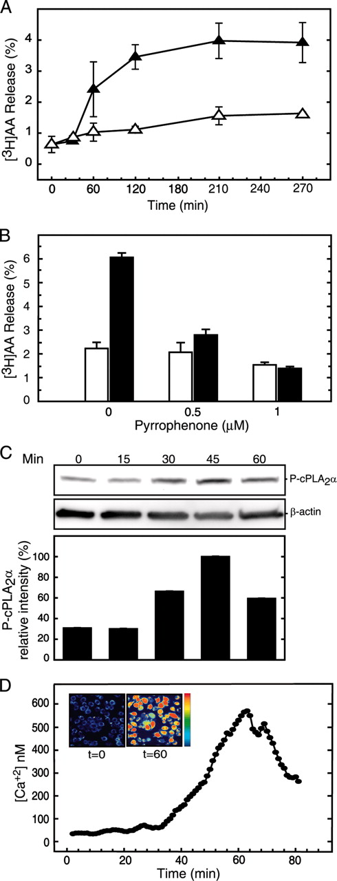Tlr3 Dependent Induction Of Nitric Oxide Synthase In Raw 2647