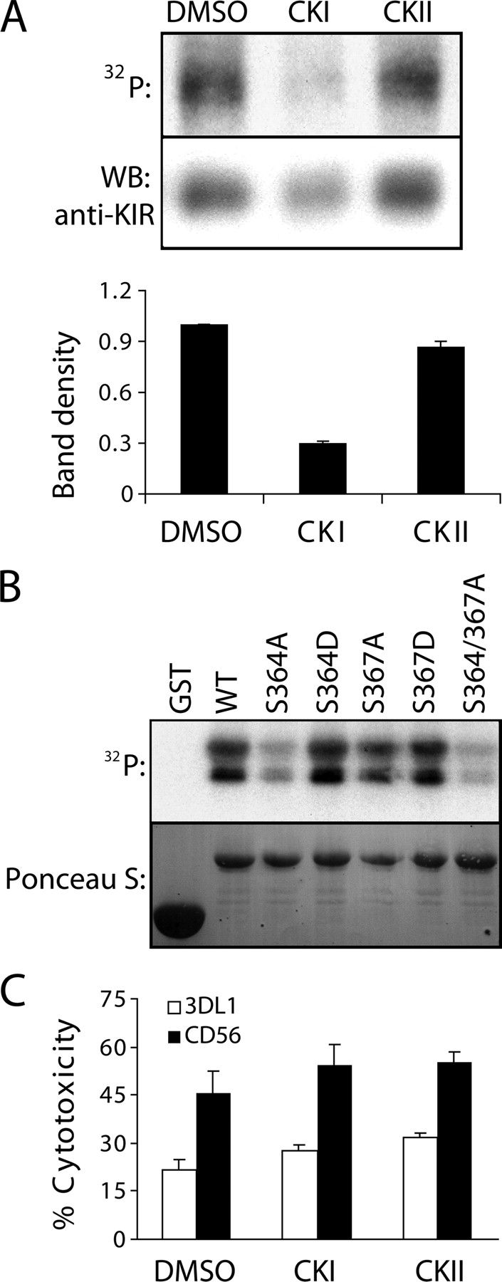 Protein Kinase C Regulates Expression and Function of