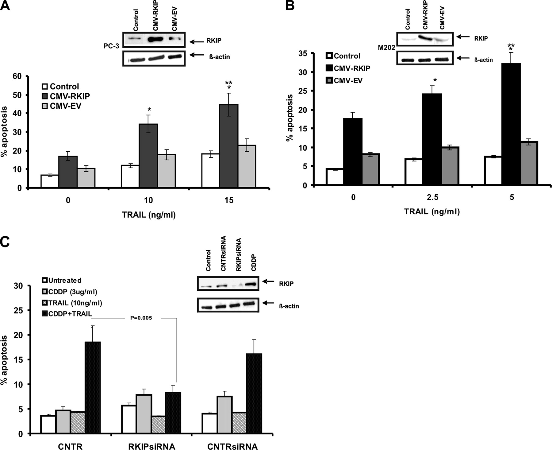 Overexpression of Soluble TRAIL Induces Apoptosis in Human