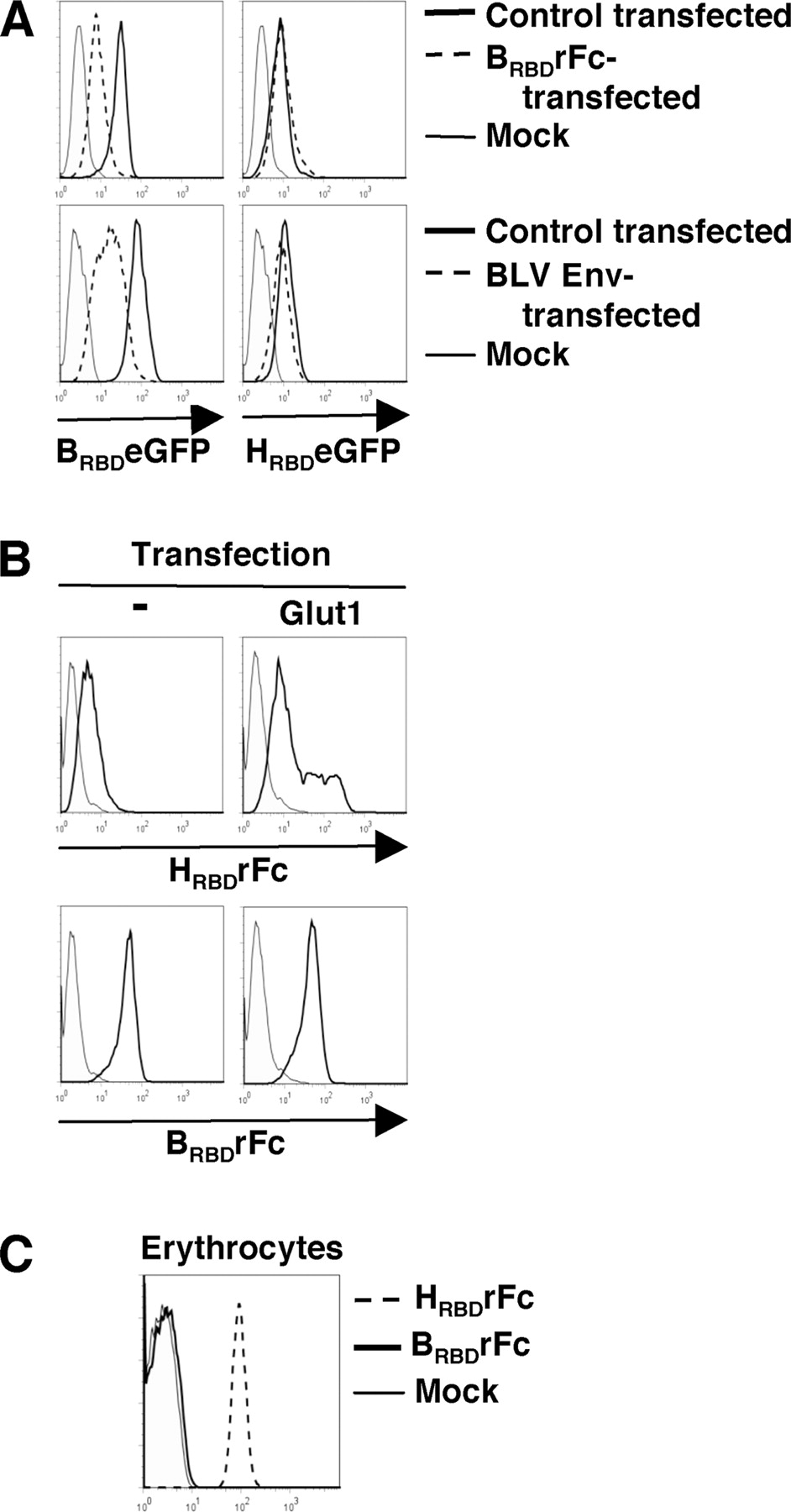 Pocell Circuit Diagram | Cell Surface Expression Of The Bovine Leukemia Virus Binding