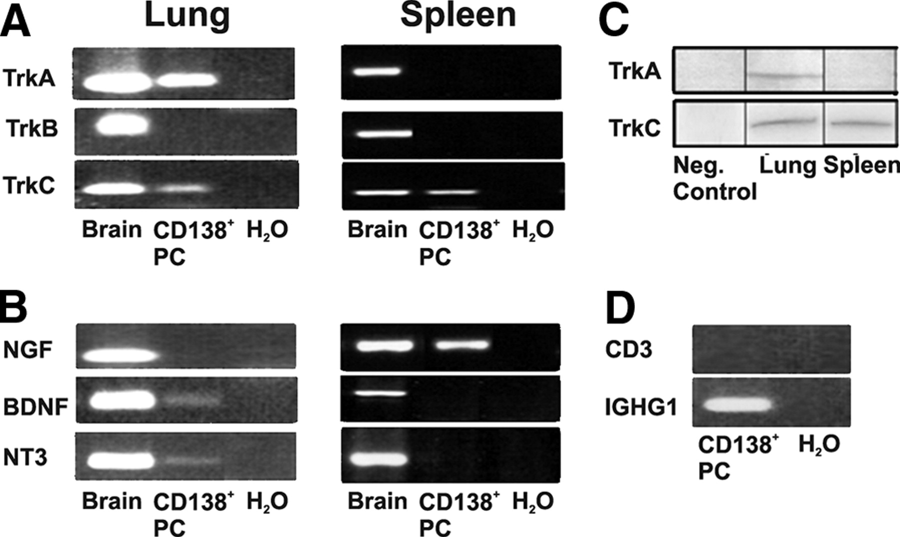 636d90301bcf Nerve Growth Factor and Neurotrophin-3 Mediate Survival of Pulmonary ...