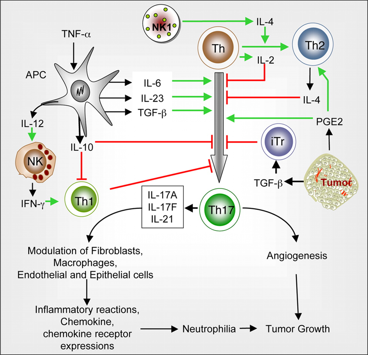 18 1 Architecture Of The Immune System: Protumor Vs Antitumor Functions Of IL-17