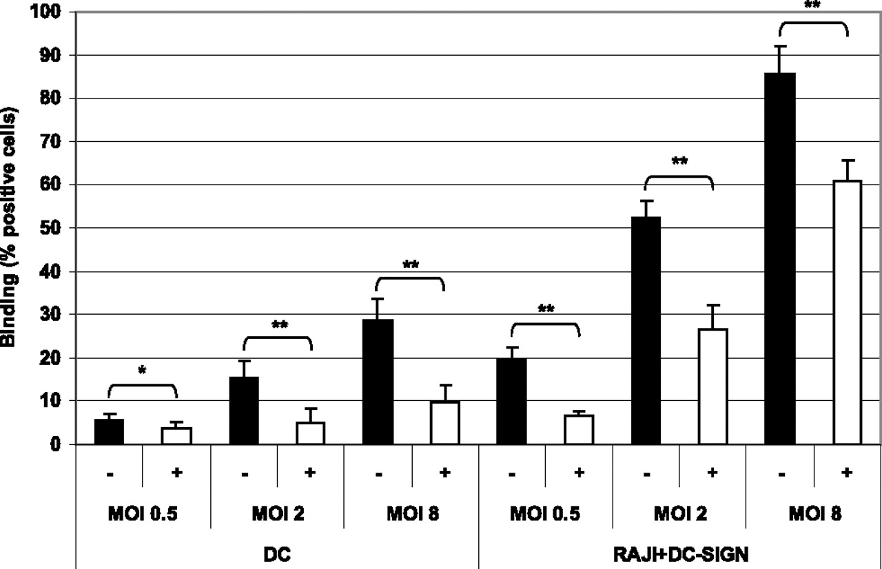 Identification of Mycobacterial α-Glucan As a Novel Ligand for DC