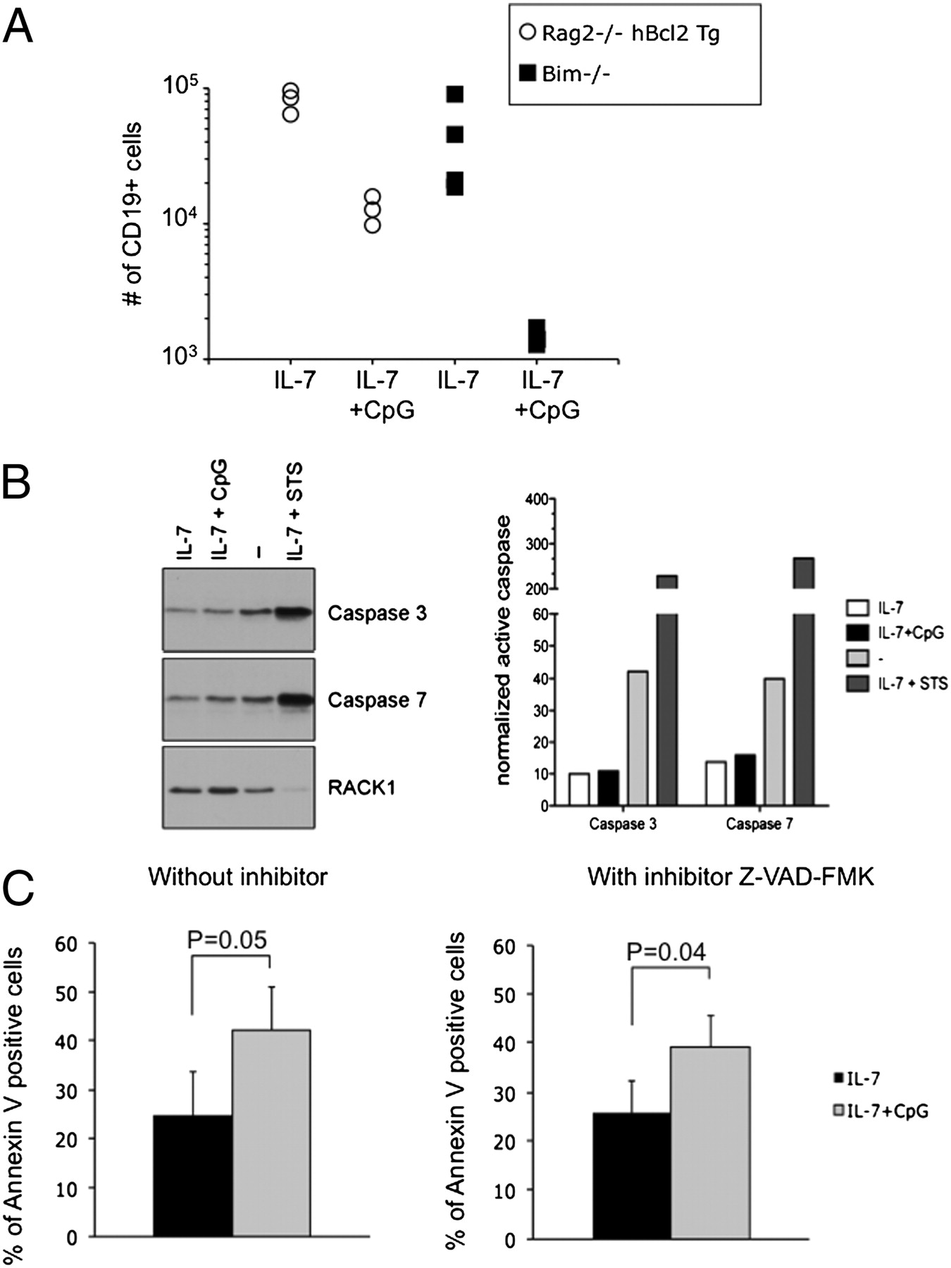 Cpg Inhibits Pro B Cell Expansion Through A Cathepsin B Dependent