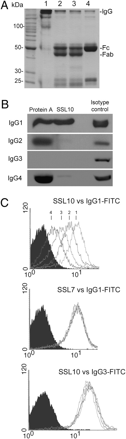 Specificity of Staphylococcal Superantigen-Like Protein 10 toward