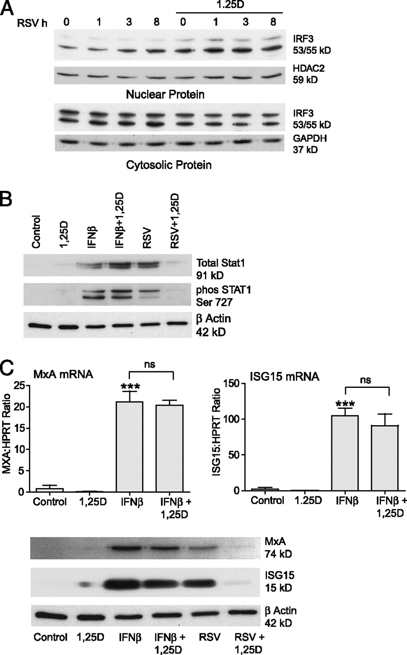 vitamin d decreases respiratory syncytial virus induction of nf kappa b figure
