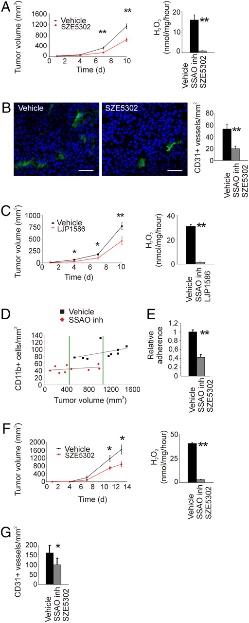 Small-Molecule Inhibitors of Vascular Adhesion Protein-1 Reduce the