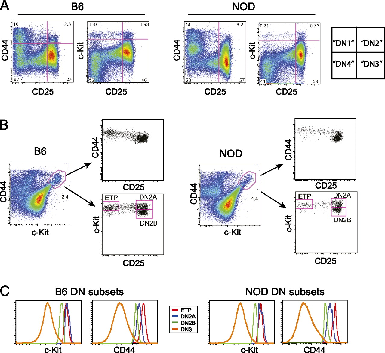 Fine-Scale Staging of T Cell Lineage Commitment in Adult